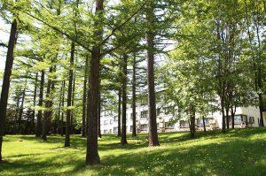 たくさんの木々に囲まれた『森のリゾート』十勝サホロリゾート