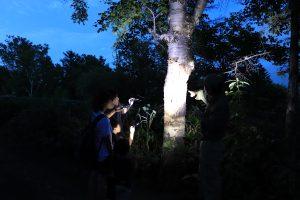 ナイトツアー「ヒグマの森の夜散歩」は通常営業後、ヒグマがおうちに帰った後の園内を散策するツアープログラム。ガイドさんからヒグマの豆知識や生活の痕跡を教えてもらえます